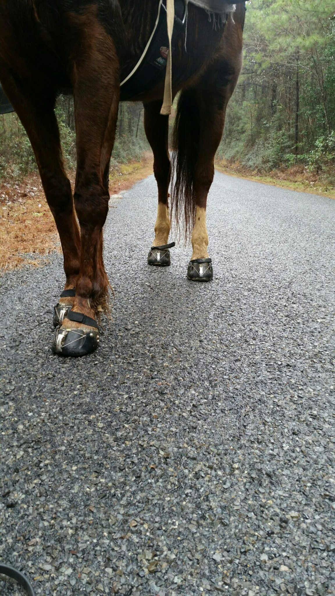 Hoof care and protection -more Easyboots – Part 1