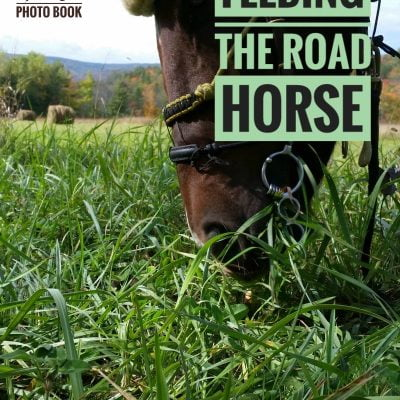 Feeding the road horse